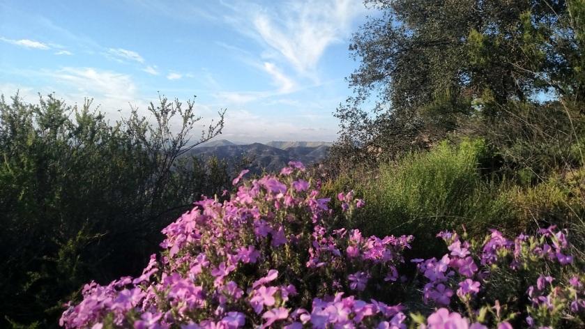 Cold Creek High Trail, Santa Monica Mountains, CA