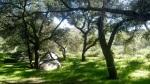 Louis A Stelzer Park, San Diego County, CA