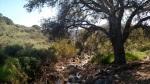 Oak Canyon, Mission Trails Regional Park, CA