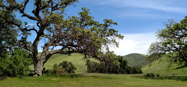 Palo Comado Canyon, Ventura County, CA