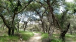 Cheeseboro Canyon, Simi Hills, CA
