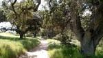 Palo Comado Canyon, Simi Hills, CA
