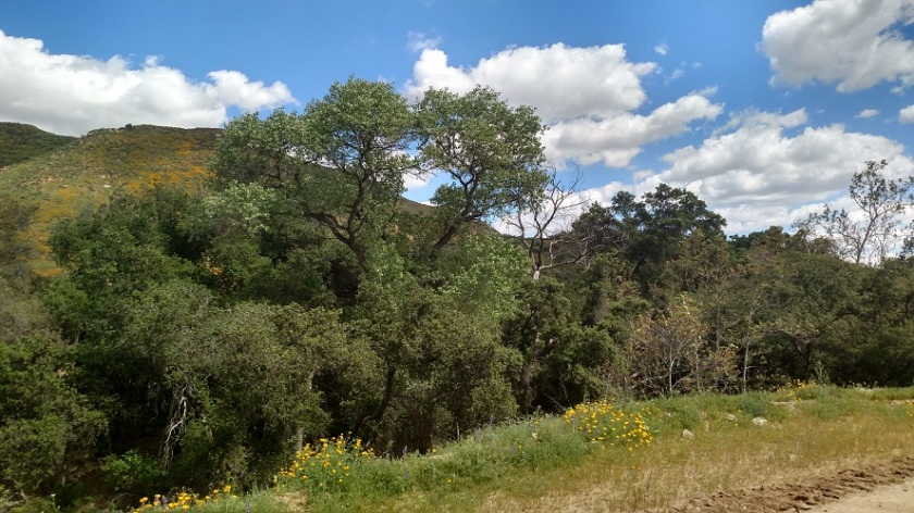 Walker Canyon, Lake Elsinore, CA