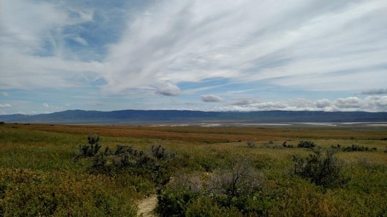 Wallace Creek, Carrizo Plain, CA