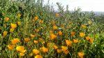 Rancho La Costa Preserve Carlsbad CA