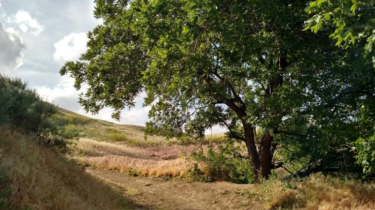 Mario de Campos Trail, Granada Hills, CA