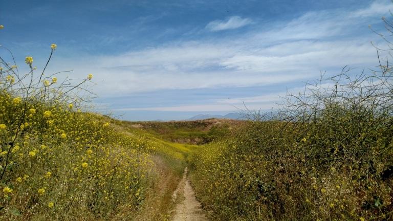 Sidewinder Trail, Chino Hills State Park