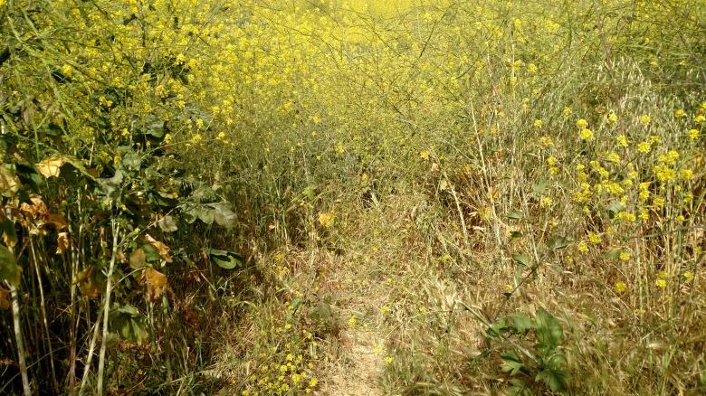 Upper Aliso Trail, Chino Hills State Park