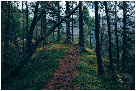 Hiking trail through the woods