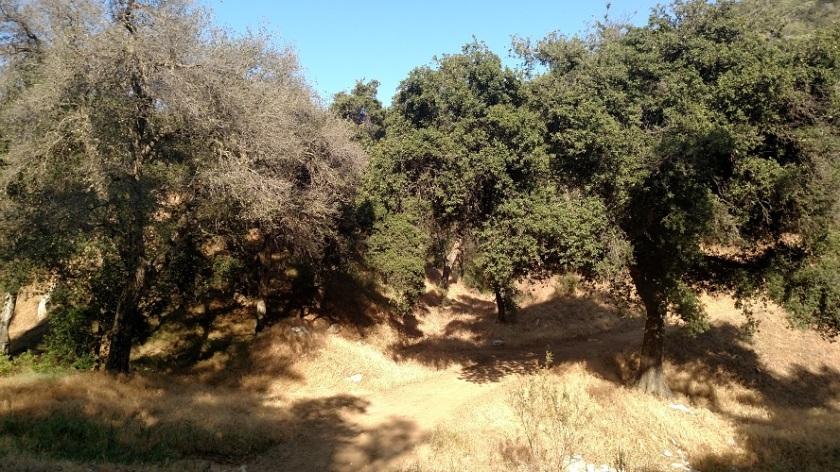Bogart County Park, Cherry Valley, CA