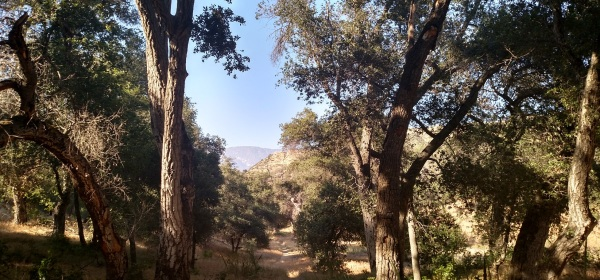 Bogart County Park, Cherry Valley, CA