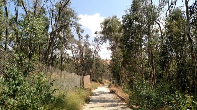 Daley Canyon Trail through Borea Canyon, San Bernardino, CA