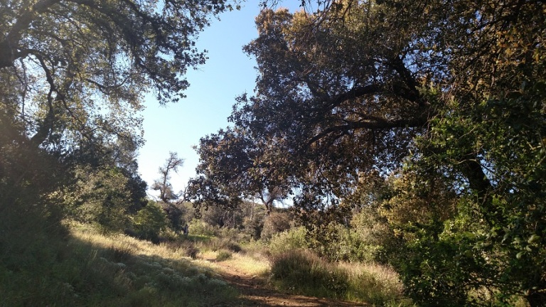 Harvey Moore Trail, Cuyamaca Rancho State Park, CA