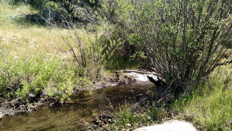 Juaquapin Creek, Cuyamaca Rancho State Park, CA