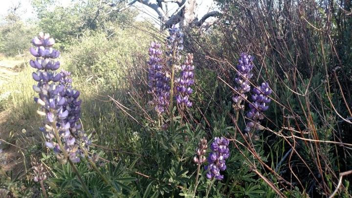 Harvey Moore Trail, Cuyamaca Rancho State Park, CA