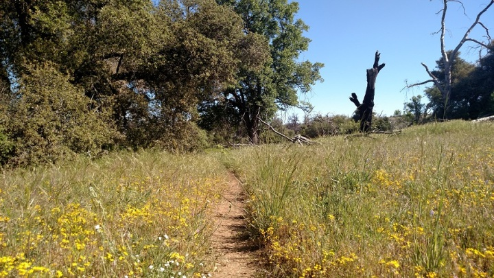 Dyer Spring Trail, Cuyamaca Rancho State Park, CA