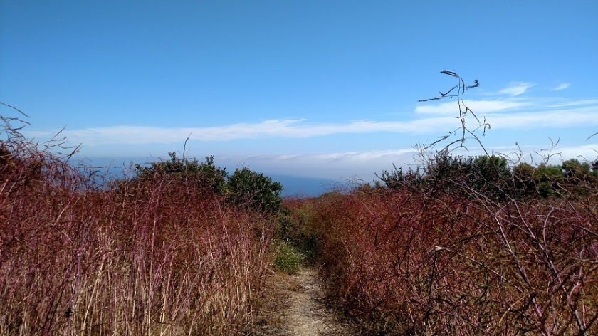Ford Trail, Upper Filiorum Reserve, Palos Verdes, CA