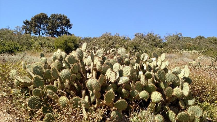 Upper Filiorum Reserve, Palos Verdes Peninsula, CA