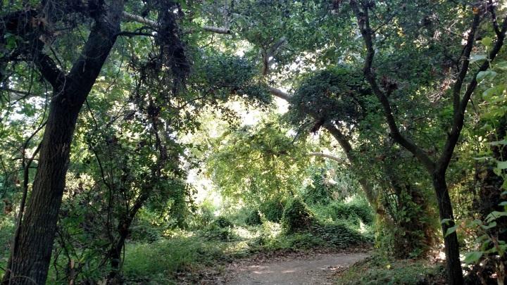 Arroyo Trabuco Trail, Orange County, CA