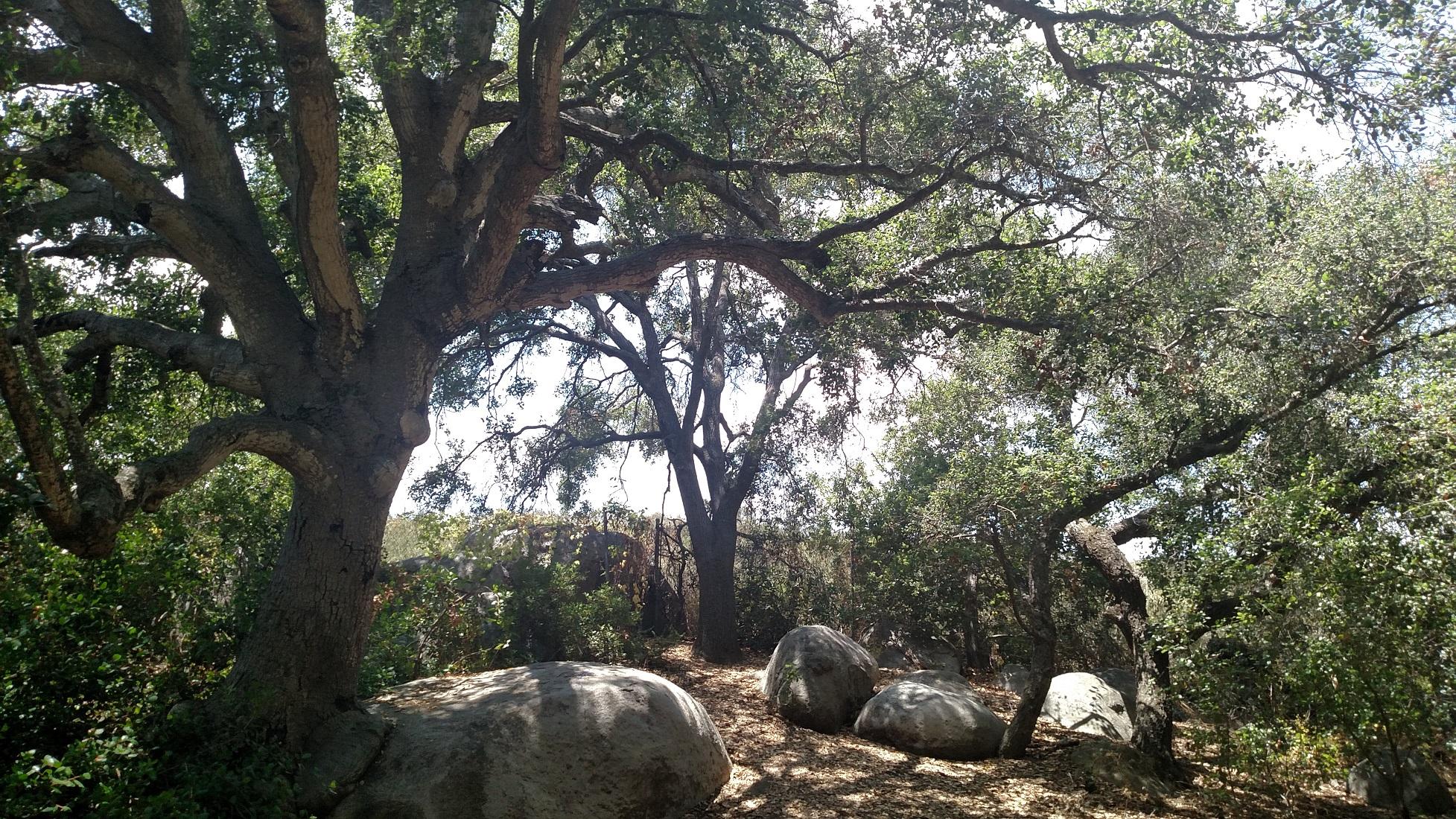 Buena Vista Park, San Diego County, CA