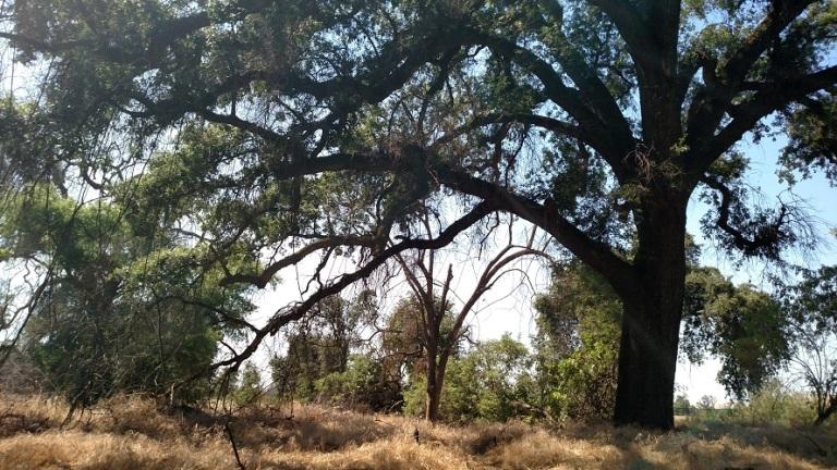 Kaweah Oaks Preserve, Exeter, CA
