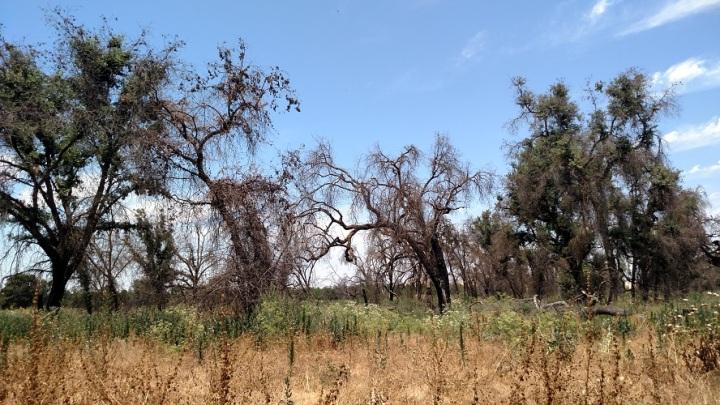 Sycamore Trail, Kaweah Oaks Preserve, Exeter, CA