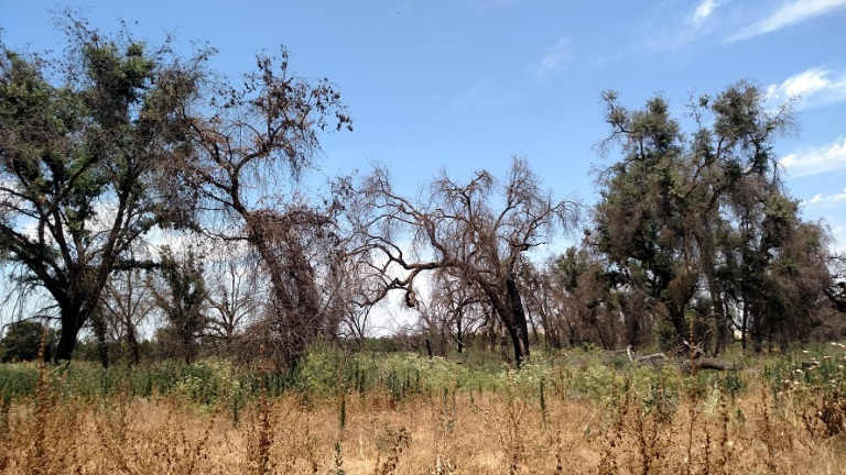 Sycamore Trail, Kaweah Oaks Preserve, Exeter, CA