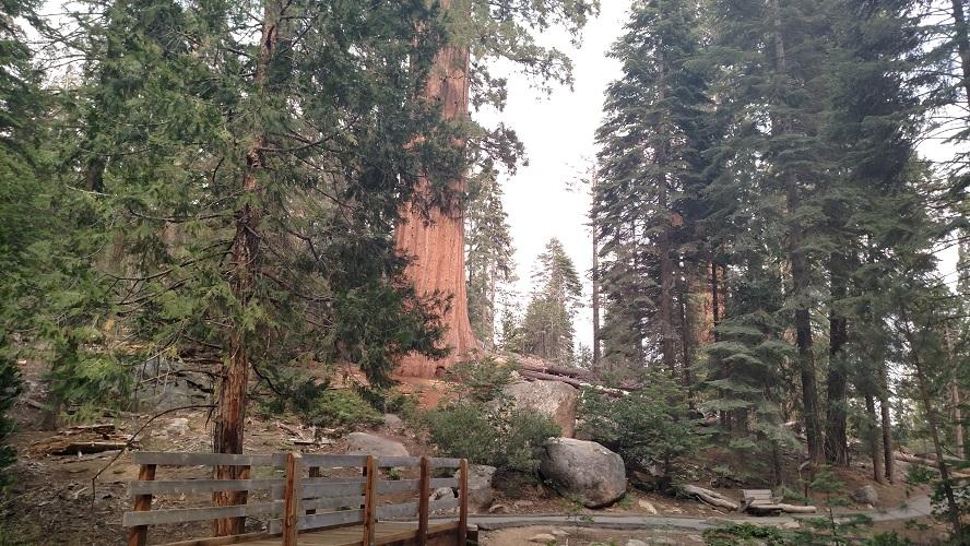 Trail Of 100 Giants Nobody Hikes In La