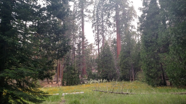 Trail of 100 Giants, Giant Sequoia National Monument