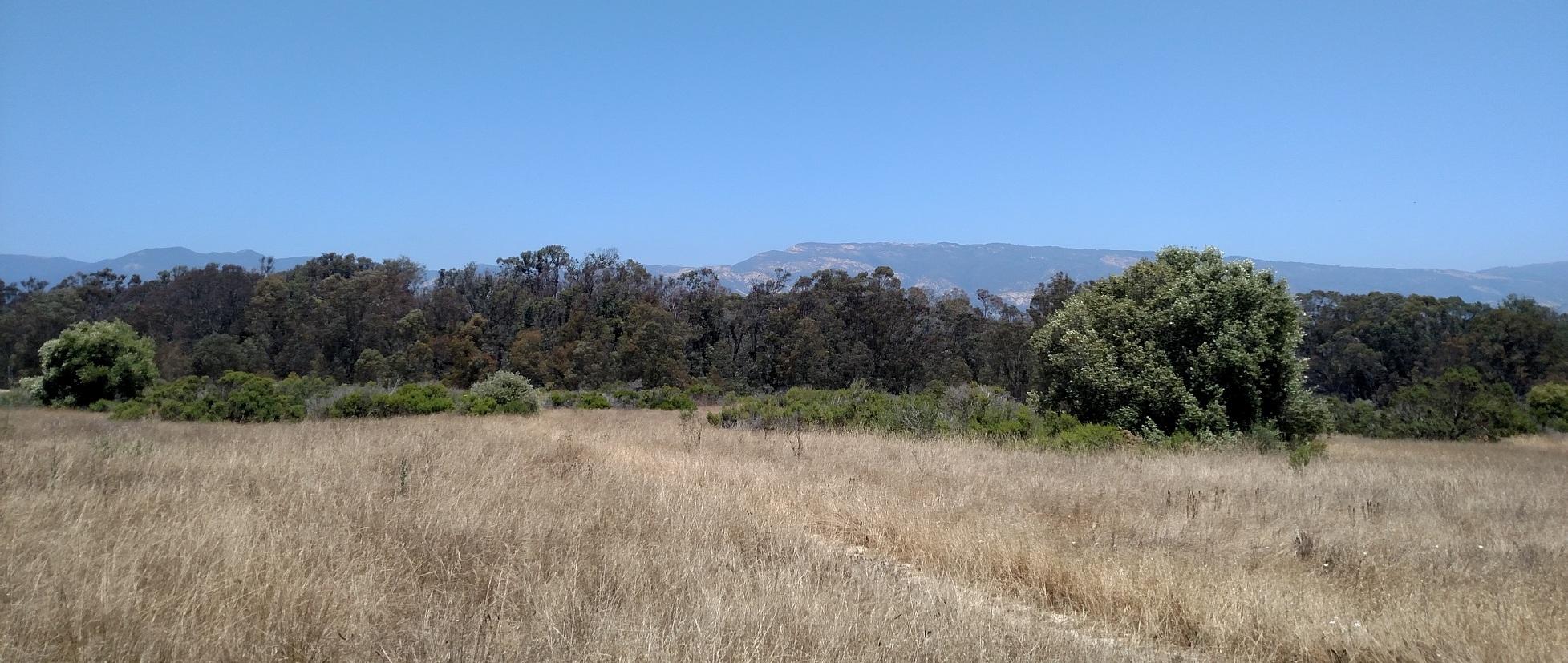 Ellwood Mesa, Santa Barbara County, CA