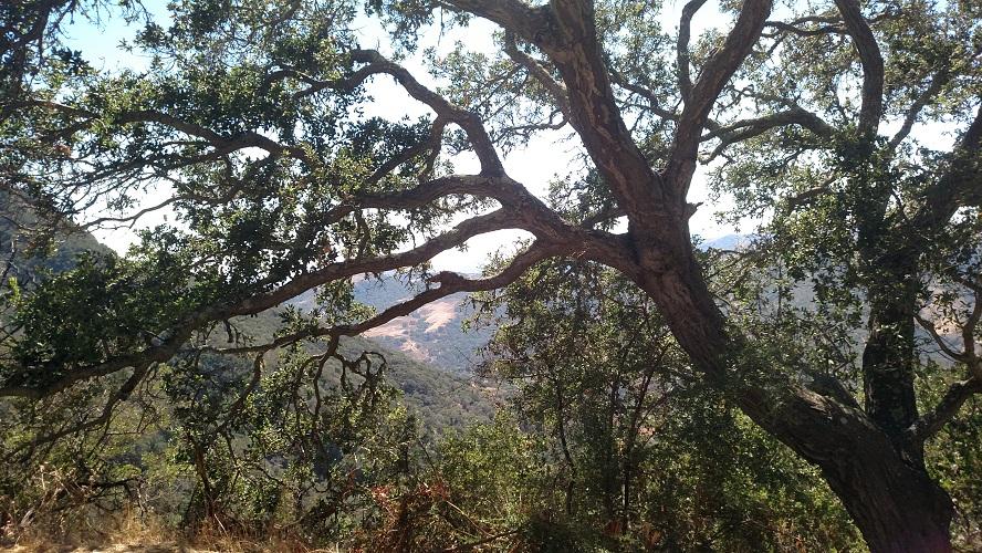 Gaviota Peak Fire Road, Santa Barbara County, CA