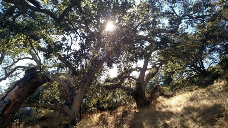 Yucca Trail, Gaviota State Park, CA