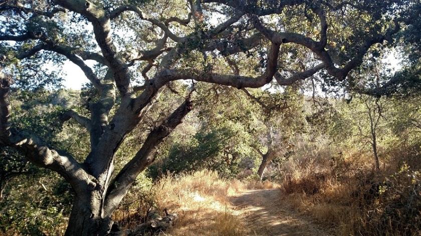 Las Cruces Trail, Gaviota State Park, CA