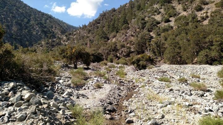 Manzanita Trail, Angeles National Forest, CA
