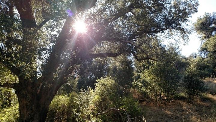 Cuyamaca Rancho State Park, San Diego County CA