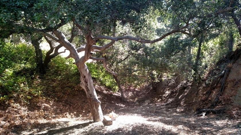 Newhall Pass Open Space, Santa Clarita, CA