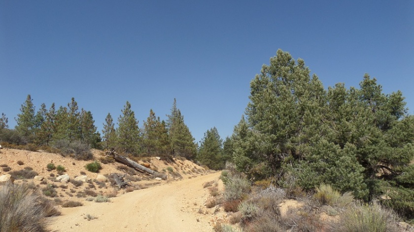 Forest road 5N04, Angeles National Forest, CA