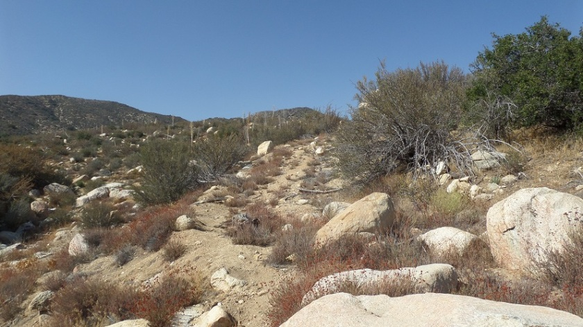 Fire break, Bare Mountain, Angeles National Forest, CA