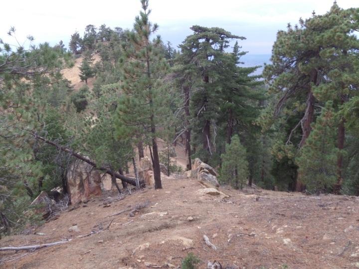 Reyes Peak Trail, Los Padres National Forest, CA