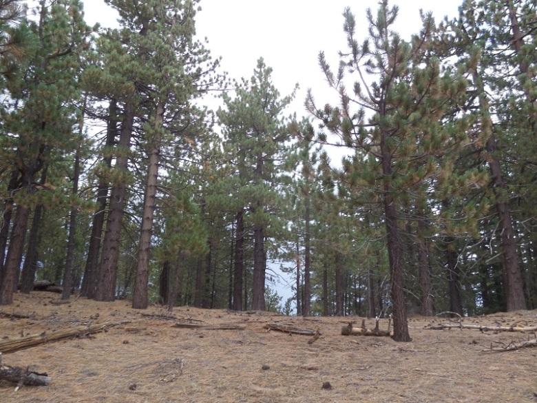 Reyes Peak, Los Padres National Forest, CA