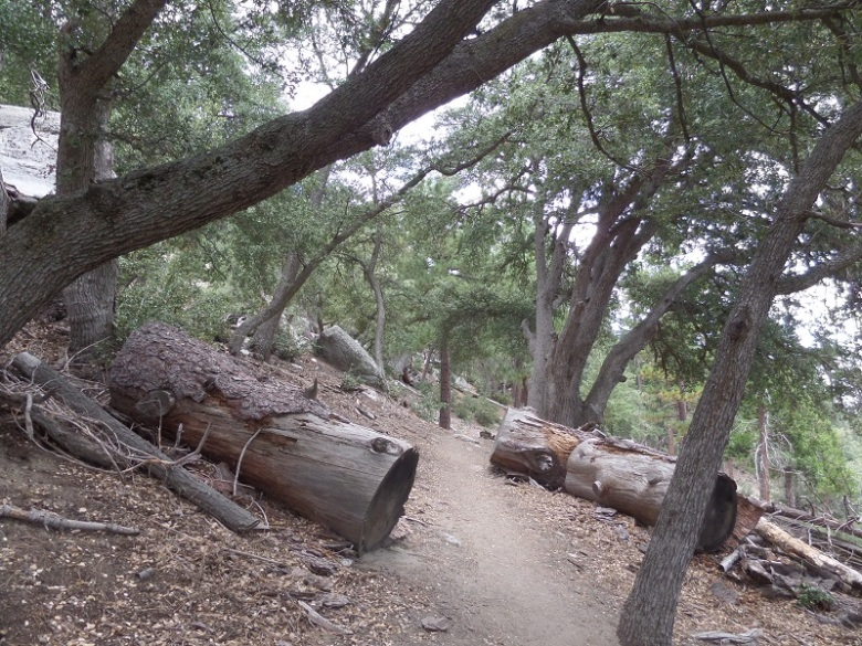 Marion Mountain Trail, Idyllwild, CA