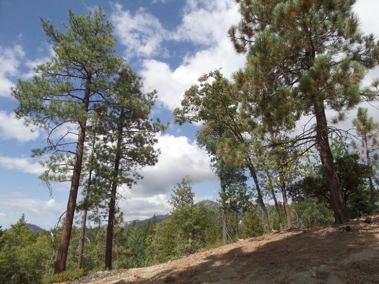 Stone Creek Trail, Idyllwild, CA
