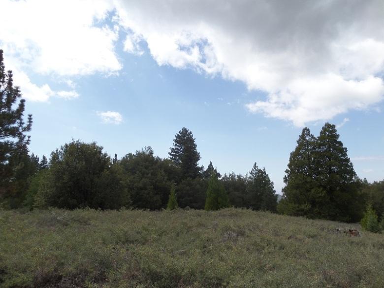 Sawmill Flats, Mt. San Jacinto State Park, CA