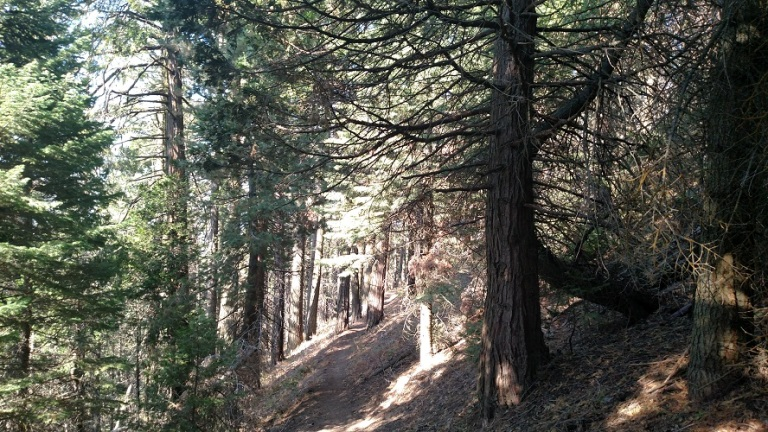 Unal Trail, Sequoia National Forest