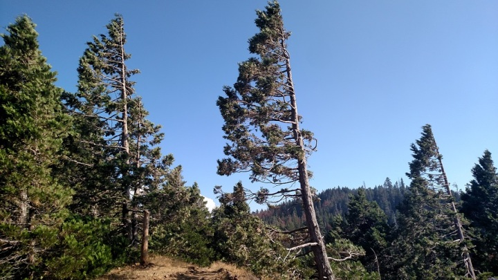 Unal Summit, Sequoia National Forest, CA