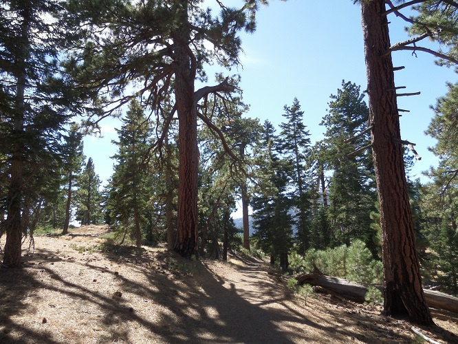 Pacific Crest Trail, Angeles National Forest, CA