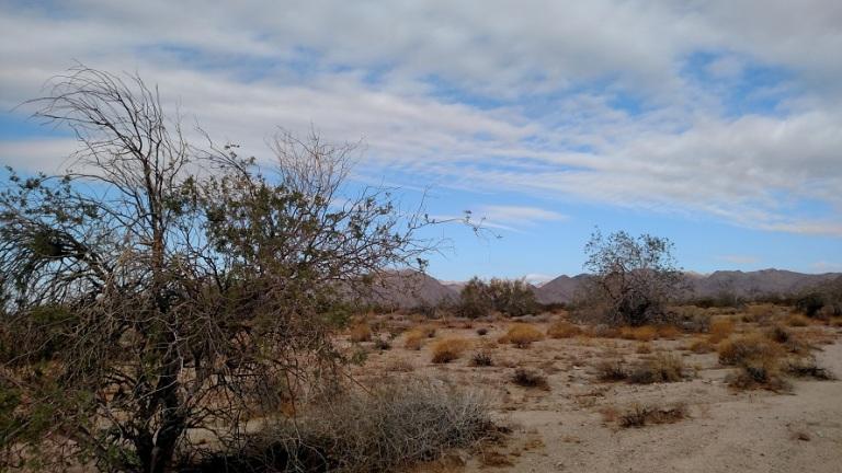 Bajada Trail, Joshua Tree National Park