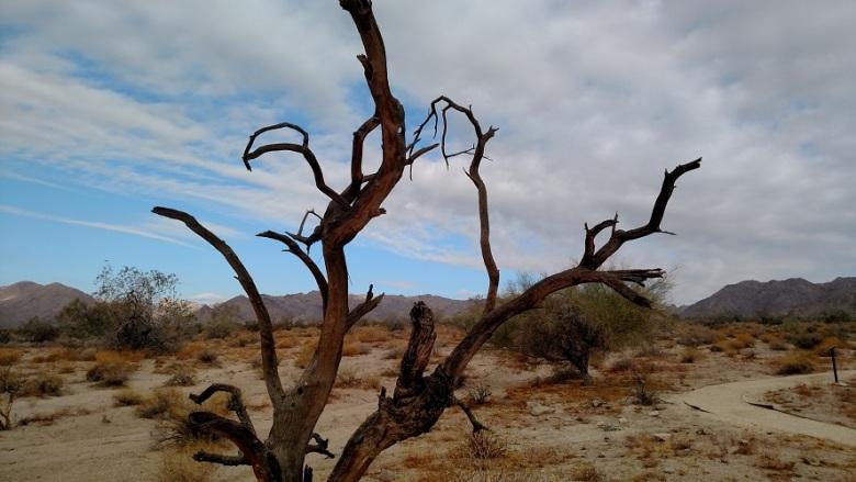 Bajada Nature Trail, Joshua Tree National Park