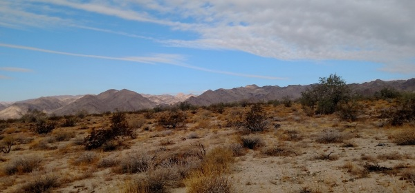 Bajada Nature Trail, Joshua Tree National Park