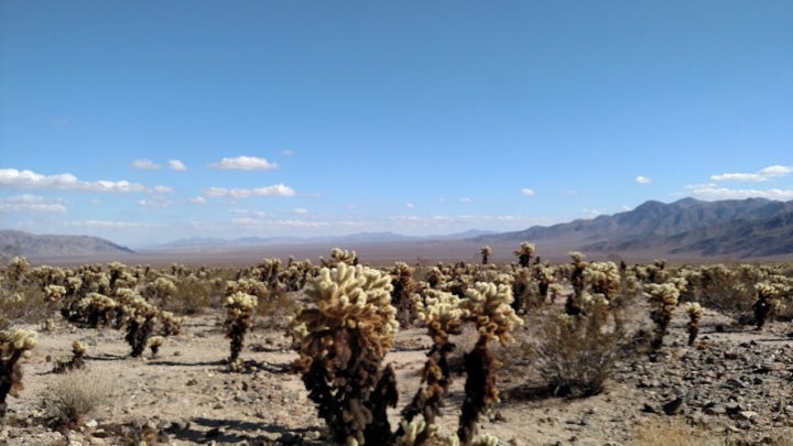 Cholla Cactus Garden Trail, Joshua Tree National Park